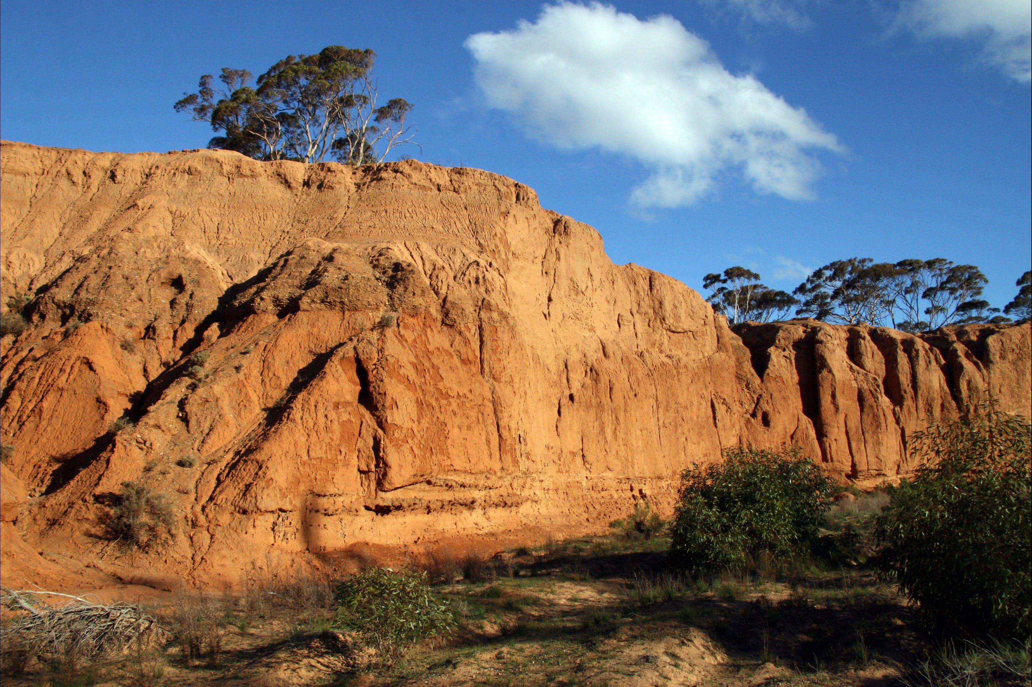 Red Banks Conservation Park - Accommodation Adelaide