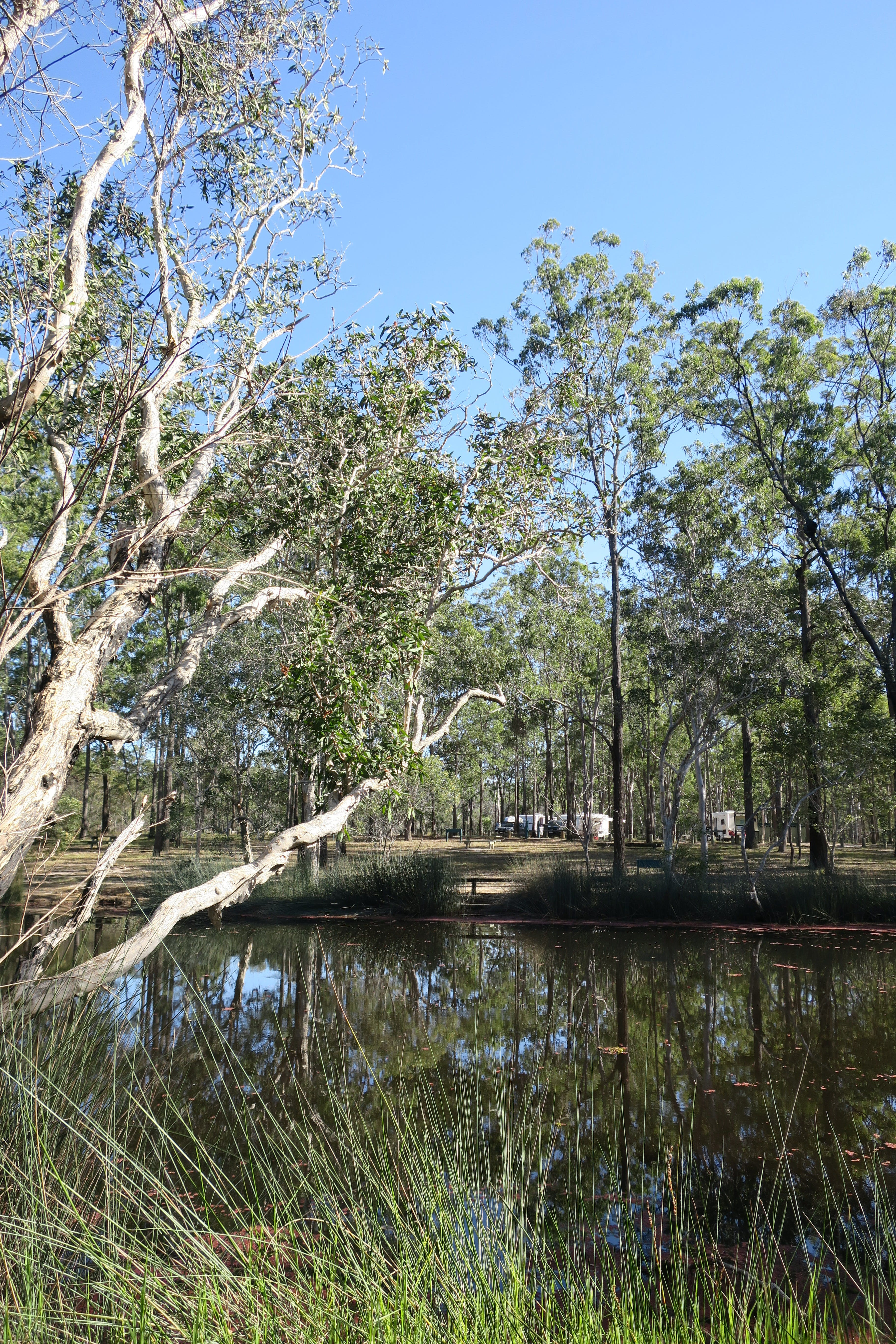 Wongi State Forest - Accommodation Adelaide