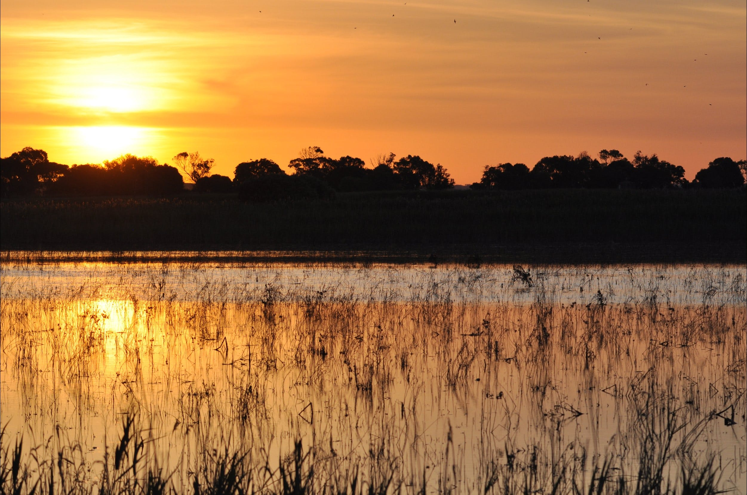Bool Lagoon Game Reserve and Hacks Lagoon Conservation Park - Accommodation Adelaide