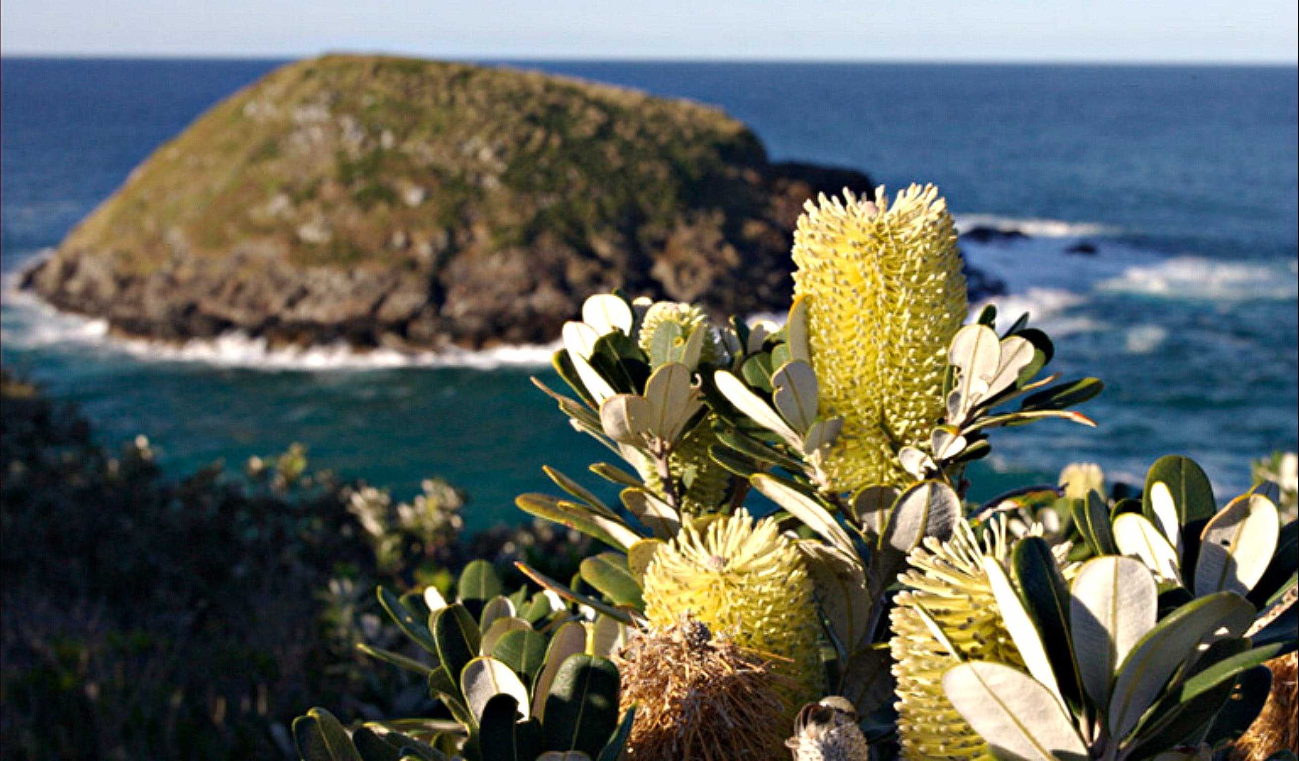 Green Island Walking Track - Accommodation Adelaide
