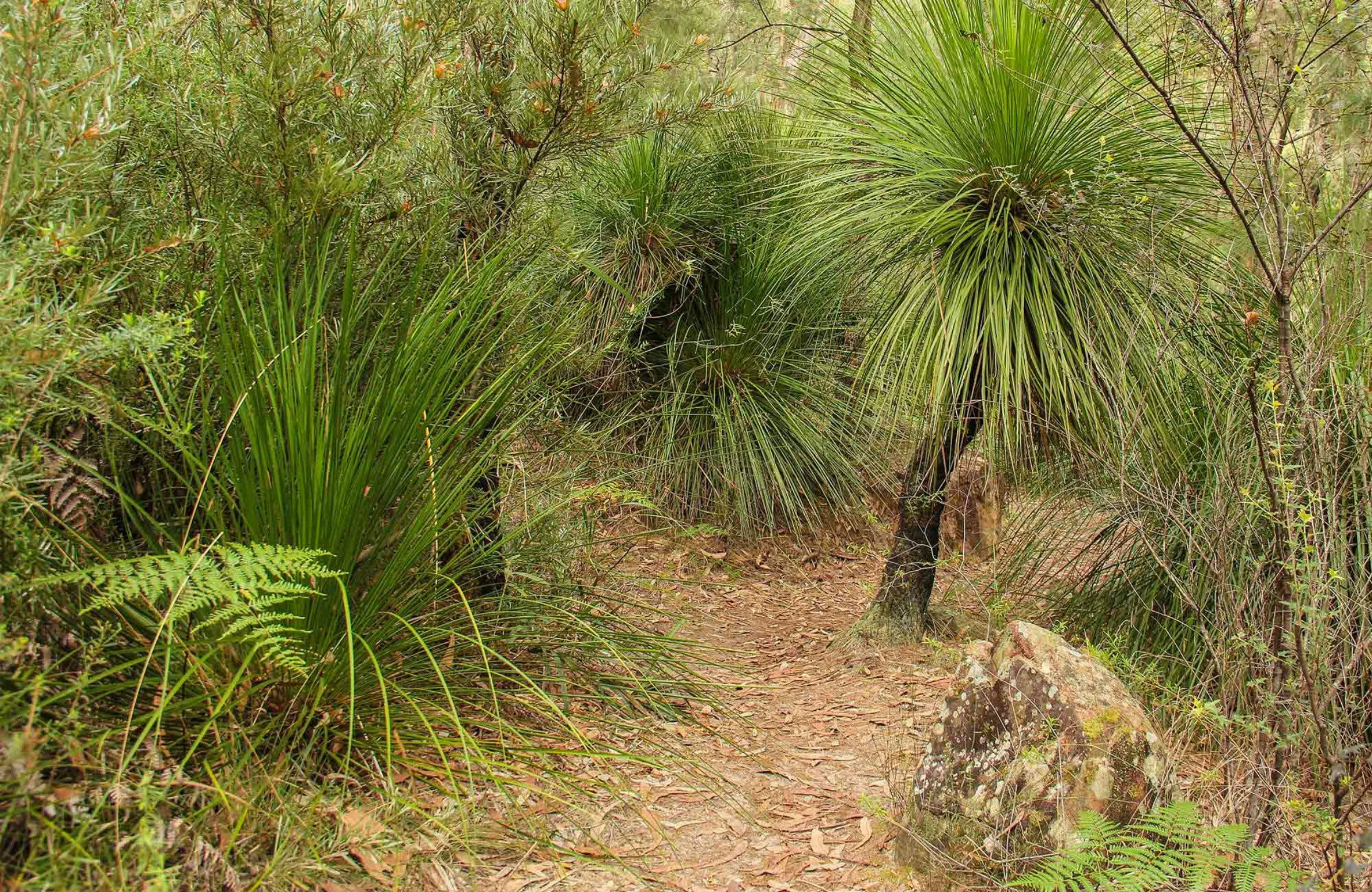 Grass Tree Circuit - Accommodation Adelaide