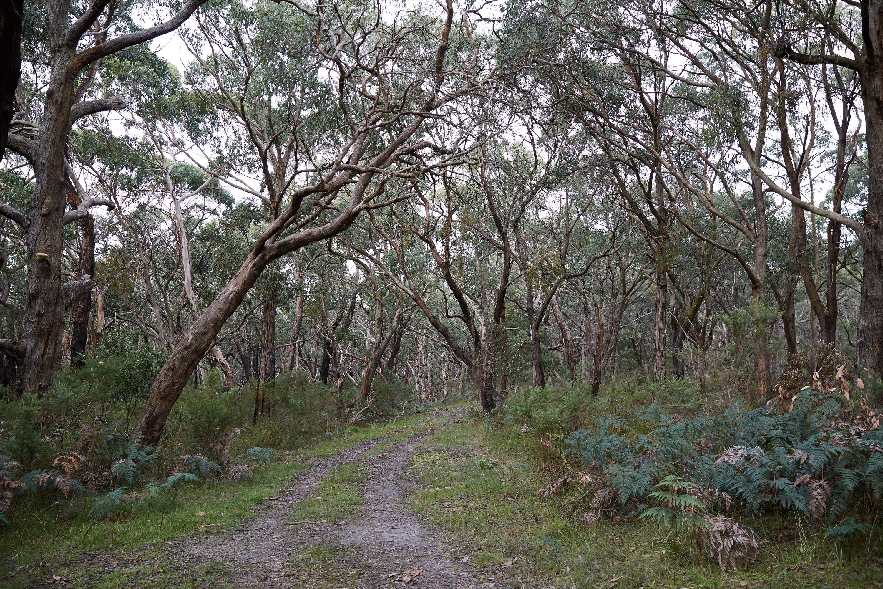 Pink Line and Loop Trail - Mountain Biking - Accommodation Adelaide