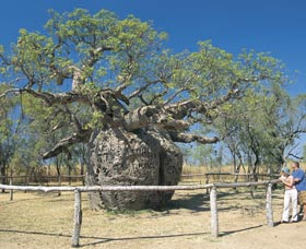 Boab Prison Tree - Accommodation Adelaide