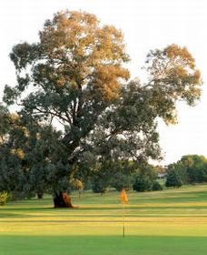 Cowra Golf Club - Accommodation Adelaide