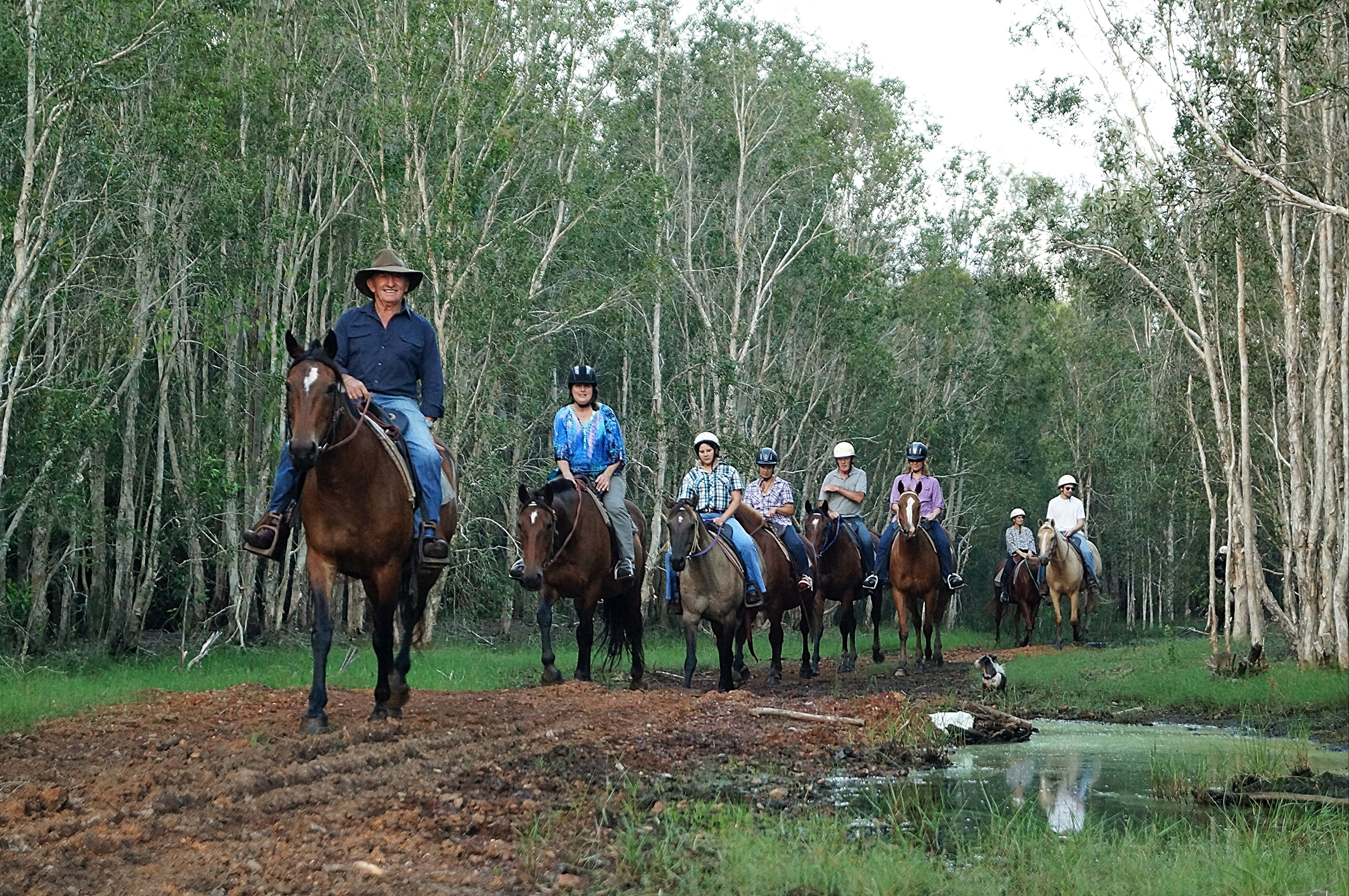 Night Horse Ride and Dinner - Accommodation Adelaide