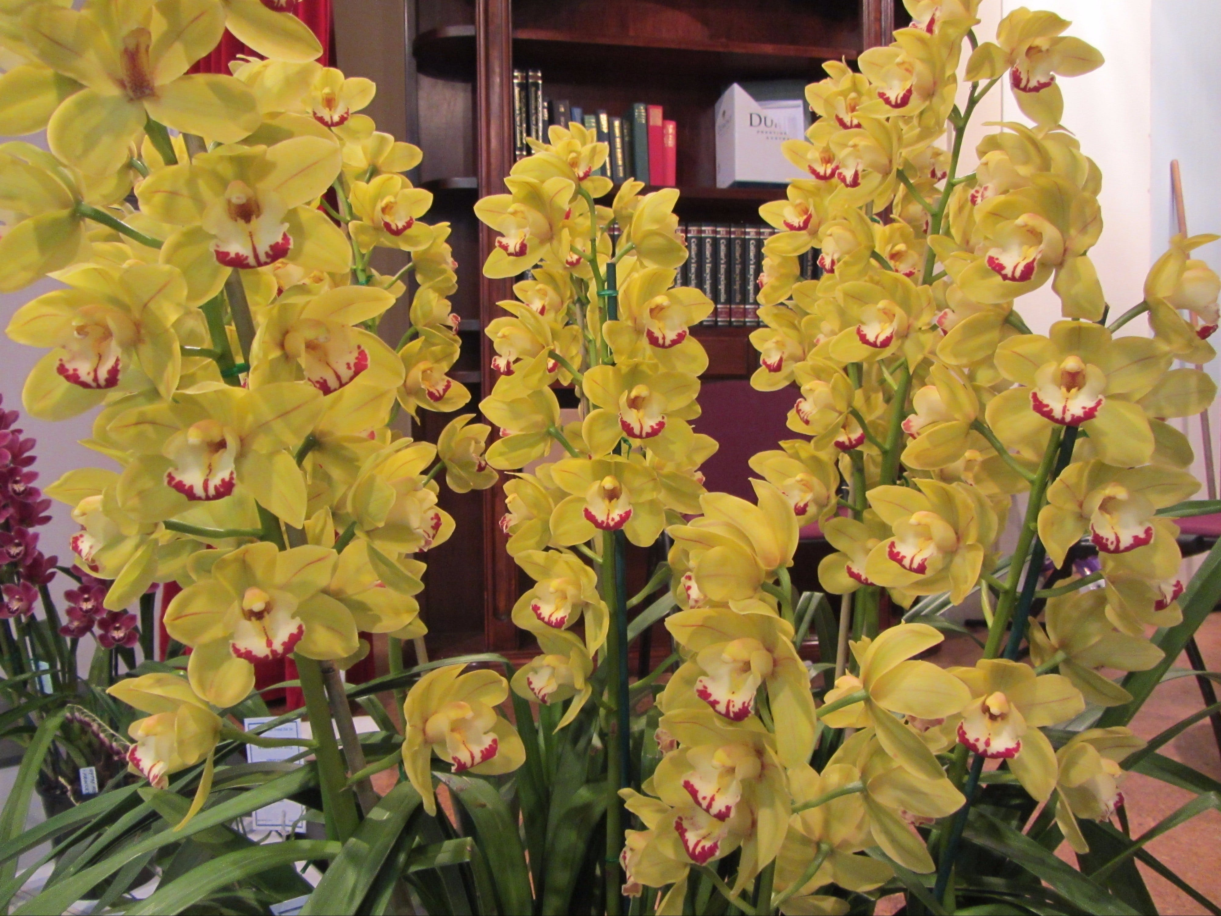 Sapphire Coast Orchid Club Winter Orchid Show - Accommodation Adelaide