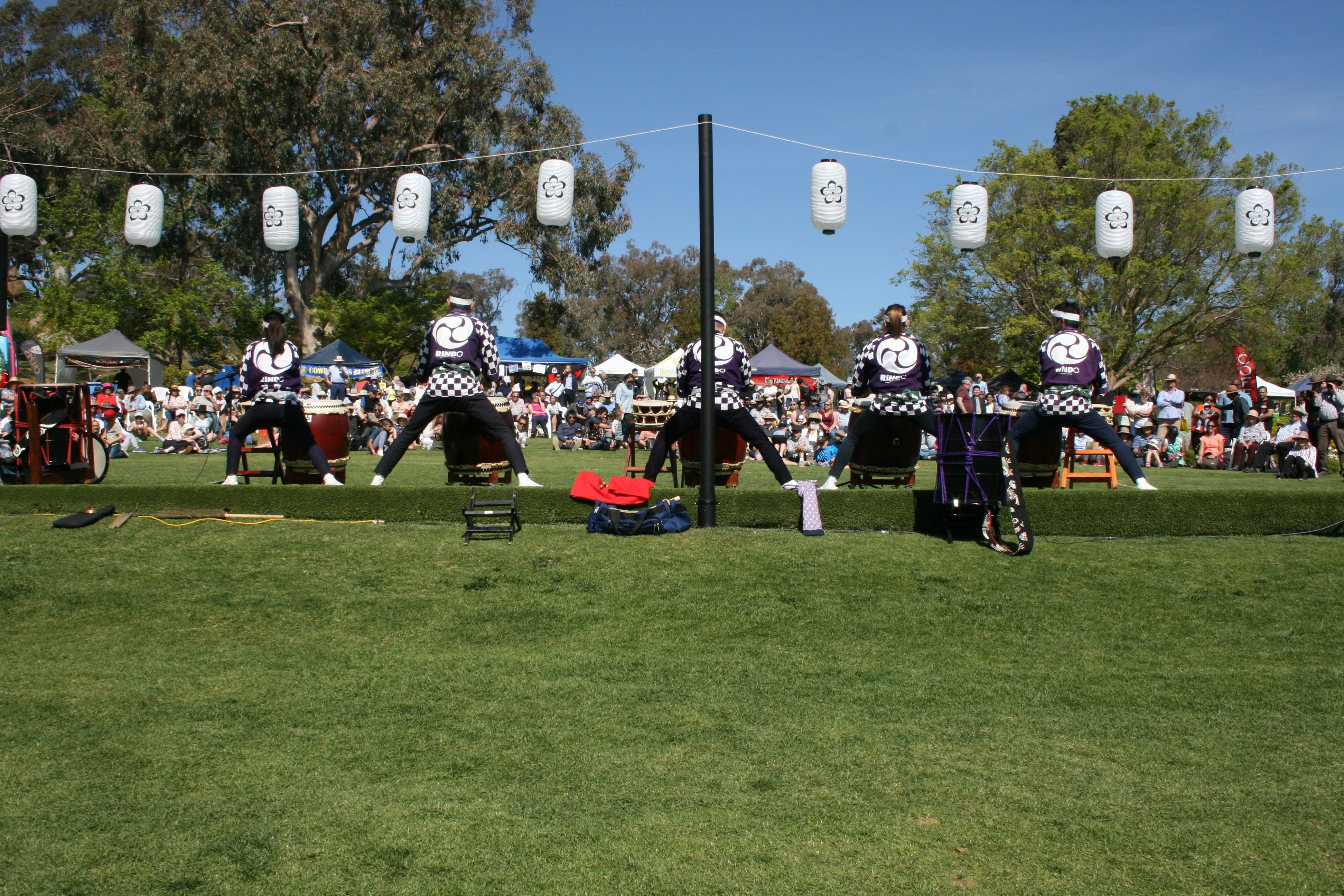 Sakura Matsuri  - Cherry Blossom Festival - in doubt due to Covid-19 - Accommodation Adelaide