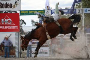Stroud Rodeo and Campdraft - Accommodation Adelaide