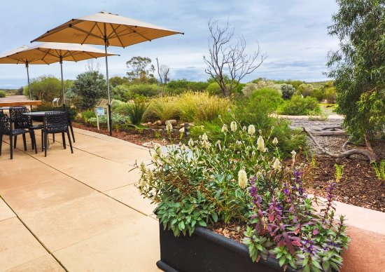 Arid Lands Botanic Garden Cafe - Accommodation Adelaide