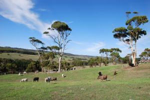 Lisieux Farm Bed and Breakfast - Accommodation Adelaide
